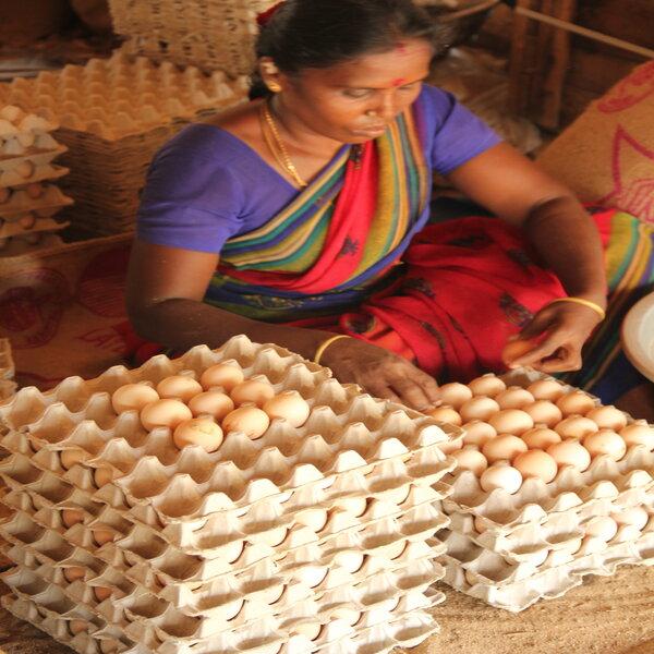 happy hens farm